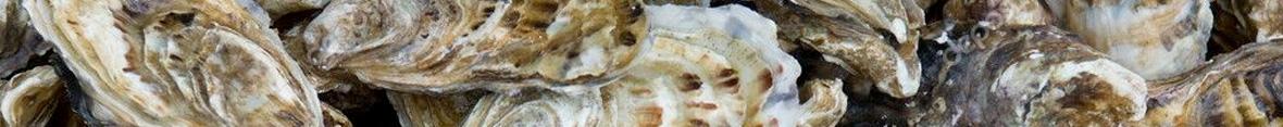 bandeau-huitre